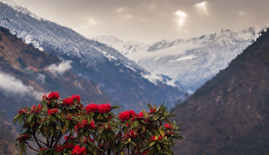 Dochula Rhododendron Festival
